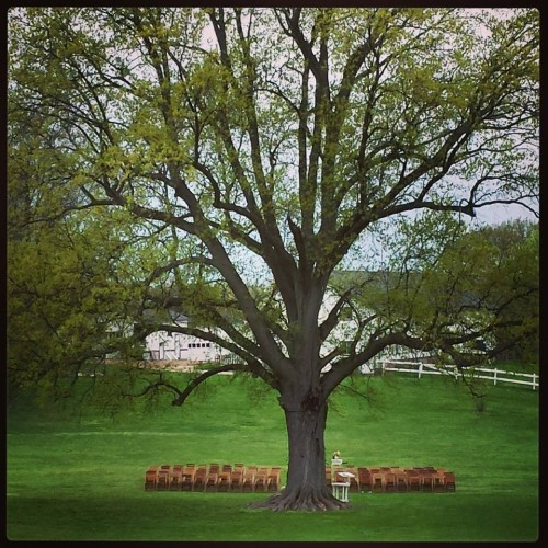 Oak Tree Ceremony